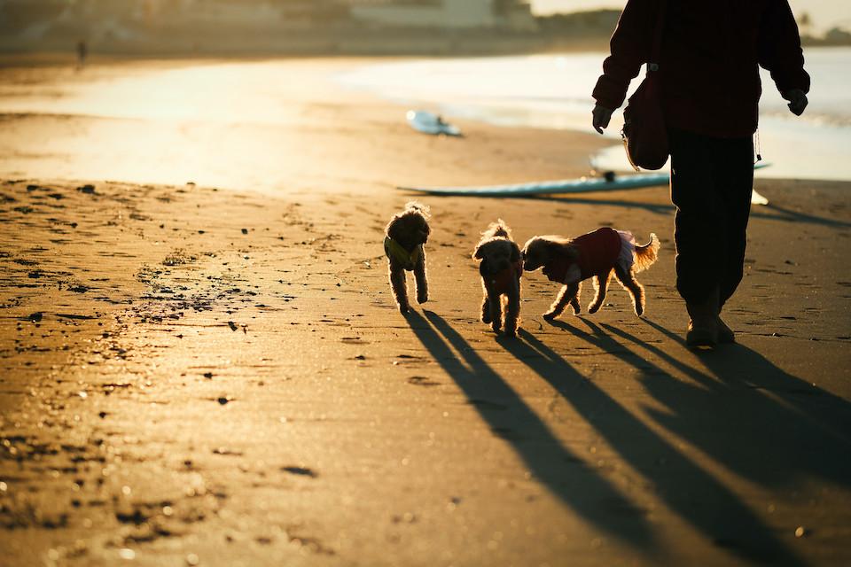 仕事前に江ノ島の鵠沼海岸で朝日を撮って遊んできた